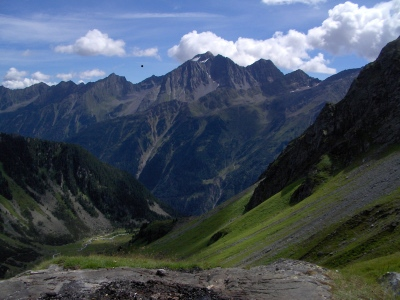 Berg Habicht